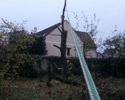 Vert-Tige - Saint-Maur-des-Fossés - Elagages