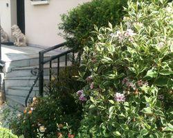 Vert-Tige - Saint-Maur-des-Fossés - Jardins en fleurs